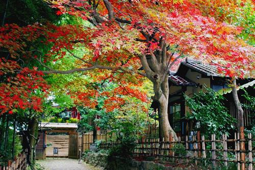 京王百草園で恒例の紅葉まつりを2014/11/8~11/30に開催