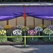 皇室ゆかりの新宿御苑「菊花壇展」が2014/11/1(土)~11/15(土)開催
