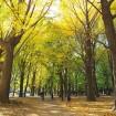 代々木公園、デング熱感染から57日ぶりに全面開放