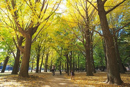 武蔵野の風景を彷彿とさせる1000本のケヤキ並木道