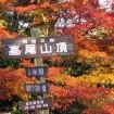 高尾山山頂の紅葉