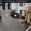 福生市とあきる野市でイノシシが通行人などを襲い男女6人がケガ