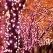目黒川沿いの桜並木が、12万球の桜色LEDイルミネーションで「冬の桜®」に