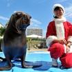 サンタクロースに扮したトレーナーとアシカが、クリスマス特別バージョンのパフォーマンスを展開