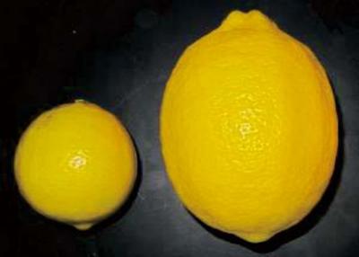 市販のレモン 八丈フルーツレモン