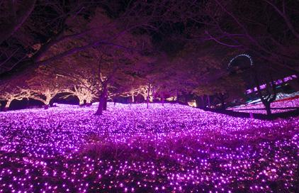 芝桜のように美しいピンク色に輝く「光の花畑」