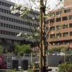 「マイ・ツリー -わたしの木-」運動、 あなたの名前とメッセージ入り「樹名プレート」を取付け