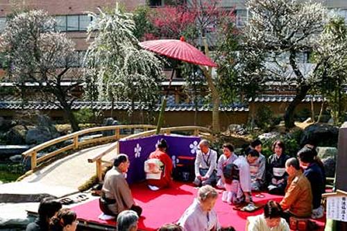 「梅まつり野点」 文京区華道連盟・茶道連盟による野点を開催。(お茶券500円)