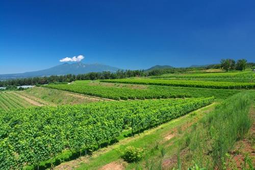 三澤農場とミサワワイナリーがある山梨県北西部に位置する明野エリア