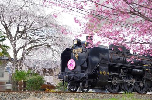 都心から一番近い蒸気機関車として人気の秩父鉄道「SLパレオエクスプレス」