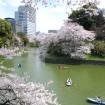 都内随一の桜の名所・千鳥ヶ淵緑道、夜のライトアップも絶景「千代田のさくらまつり」が3月27日(金)から