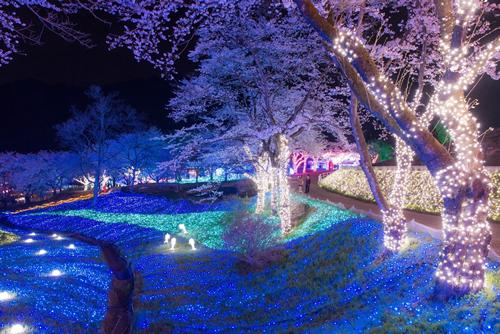 「夜桜イルミネーション」昨年の様子