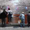 川面に浮かぶ夜桜がきれい!「目黒川の桜ライトアップ」が2015年3月25日から4月10日まで