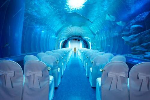 約20メートルのトンネル水槽「ワンダーチューブ」での結婚式イメージ