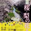 稲城市の「桜・梨の花まつり」が4月4日(土)開催 三沢川の桜並木ライトアップも絶景