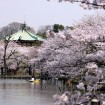 「第66回うえの桜まつり」が2015年3月21日から開催