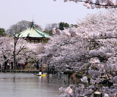 「第66回うえの桜まつり」が2015年3月21日から上野公園で開催