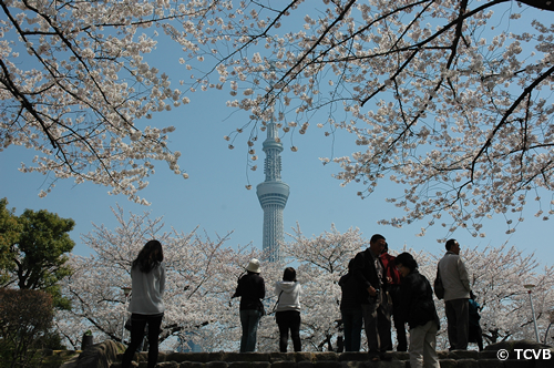 桜の向こうには東京スカイツリー®