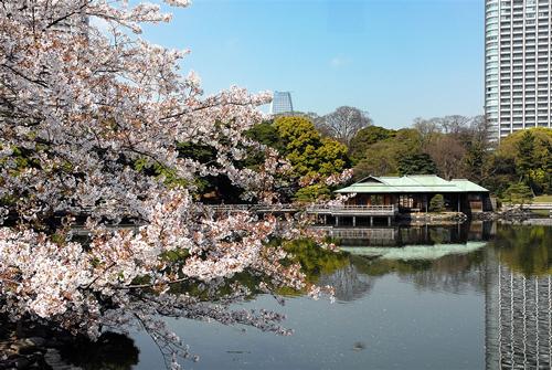 3月下旬から4月上旬はソメイヨシノが満開となり庭園に彩りを添える