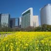 菜の花と桜の競演も!国の特別名勝・浜離宮恩賜庭園で「春の開園時間延長」