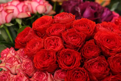 約1,000種100万輪のバラが会場を彩る
