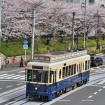 桜の開花時期に「都電さくら号」が運行!春満載の都電荒川線に乗車してお花見を楽しもう