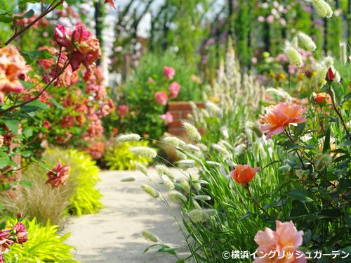 「ローズ&グラスガーデン」 アプリコットやブロンズ、ブラウンのバラを主役に、オーナメンタル・グラスやブルー・リーフの植物を組み合わせたアンティークな印象のガーデン