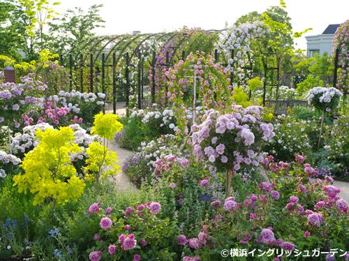「ローズ&ハーブガーデン」 淡いピンクやマウヴ・カラーのバラを主役に、ピンクや青、紫色などのハーブ、ライム・リーフの植物などを組み合わせた明るくポップな印象のガーデン