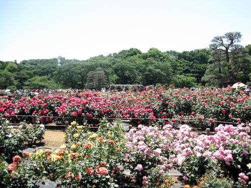 緑豊かな多摩丘陵に囲まれた「秘密の花園」