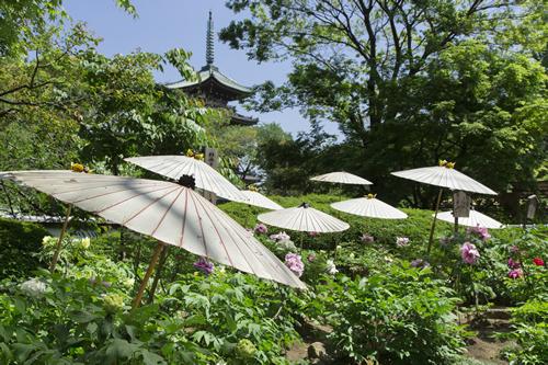上野東照宮の「春のぼたん祭」が5月10(日)まで開催