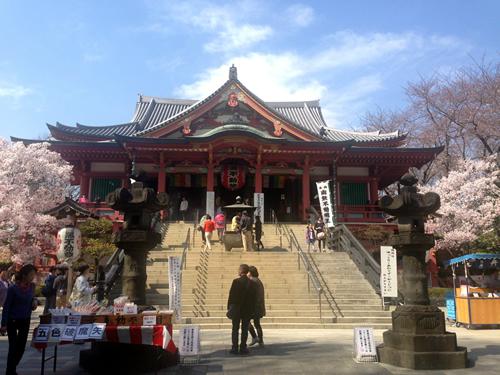 日本三大不動の一つ「目黒不動尊」の桜も満開に