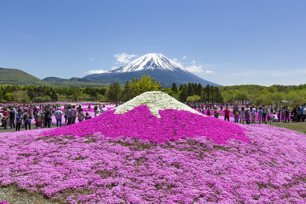首都圏最大級の約80万株!「富士芝桜まつり」が4月18日から5月31日まで