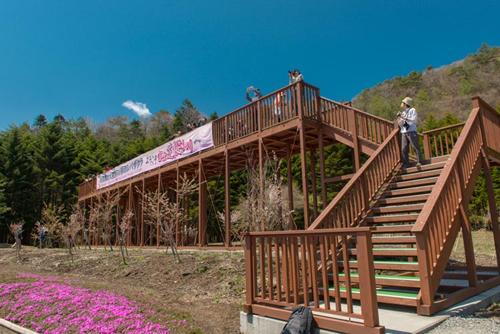 展望台からは富士山と最も奥行のある芝桜を見られる