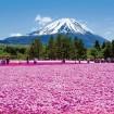 首都圏最大級の約80万株と絶景!「富士芝桜まつり」が4月18日から5月31日まで