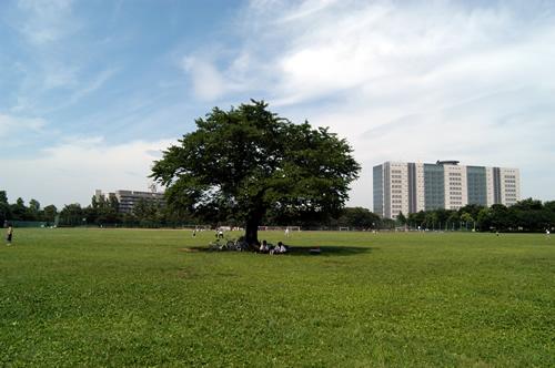 都立武蔵野中央公園