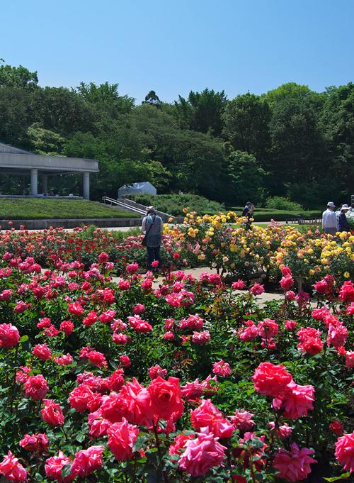 過去に「世界バラ会連合優秀庭園賞」を受賞した同園