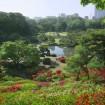 「春の六義園~大名庭園でつつじを楽しむ~」 が2015年5月6日(祝)まで開催