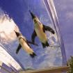 夏を先取り!サンシャイン水族館でGW期間限定の「南国ビアガーデン」開催!