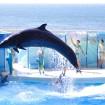 東京&首都圏の7水族館「ゴールデンウィーク2015」イベント情報まとめ