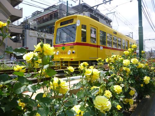 色とりどり約140種の都電荒川線バラ電車に乗ろう - 5月16日には「あらかわバラの市」も