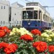 色とりどり約140種が咲く都電荒川線バラ電車に乗ろう - 5月16日には「あらかわバラの市」も