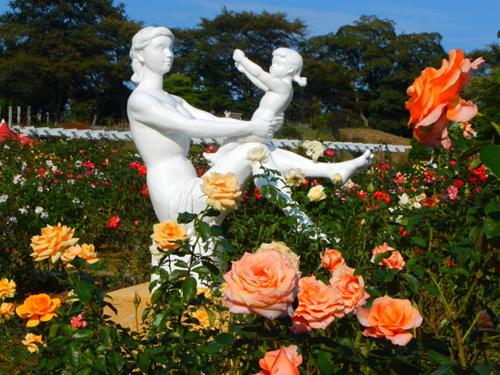 「生田緑地ばら苑」春の一般公開を5/14~5/31まで実施 約533種4,700株のバラが咲き誇る