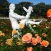 「生田緑地ばら苑」 春の一般公開が5/14~5/31まで!約533種4,700株のバラが咲き誇る
