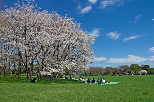 春の「水元公園」 ●おでかけガイドの詳細記事はこちら
