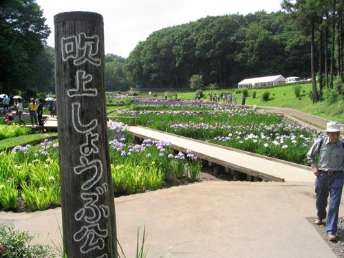 霞丘陵の一角にある谷戸地を環境保全のため整備した「吹上しょうぶ公園」