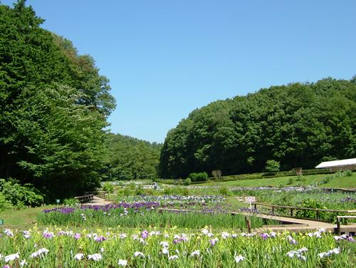 新緑が美しい初夏の公園をのんびり歩こう