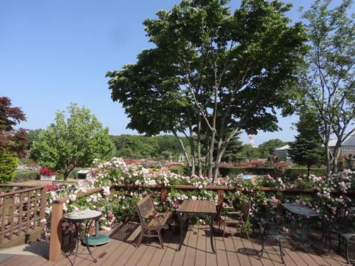 ローズガーデンが一望できるオープンスタイルの「カフェ・パティオ」