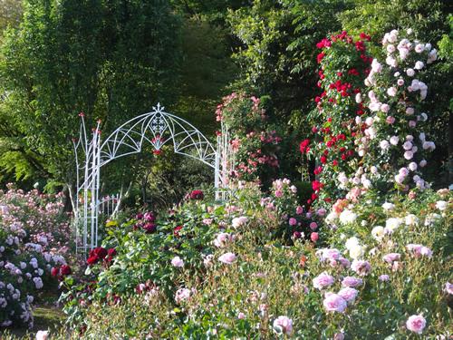 「バラの丘 イングリッシュローズ」 アンティークタッチのバラ40品種や、大人気のイングリッシュローズ110品種が咲き誇る