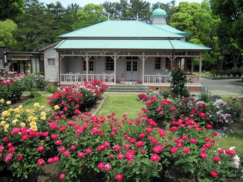 バラに囲まれた八幡山の洋館で「春のバラフェスタ」を5/23(土)、24(日)に開催