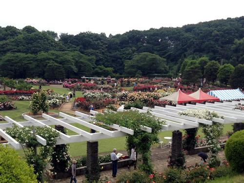 多摩丘陵の緑のパノラマに囲まれたばら苑
